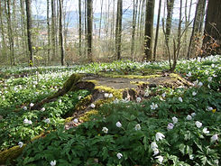 Waldspielgruppe Bern