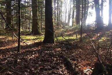 Schüpfen Wald