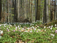 Wald Wiese Bern