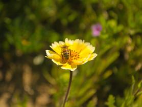 Gallery: Wildflower Blooms in Sierra Foothills