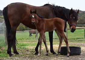 6759 Felicity and foal.jpg