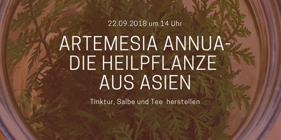 Artemesia annua - die Heilpflanze aus Asien