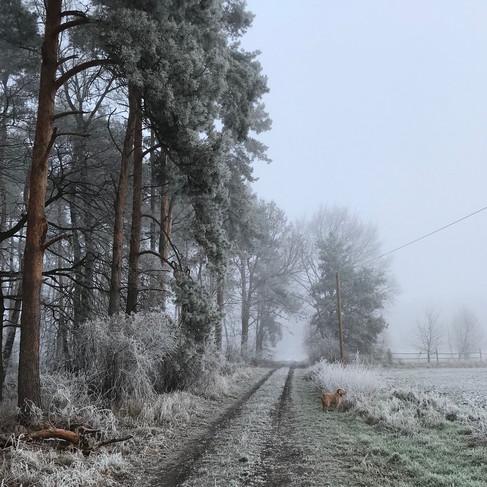 ©Oderbruch-blog.de_Winter4.jpg
