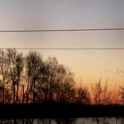 Kraniche vor dem Sonnenaufgang Oderbruch