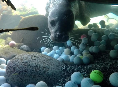 How Golf is Polluting Our Oceans