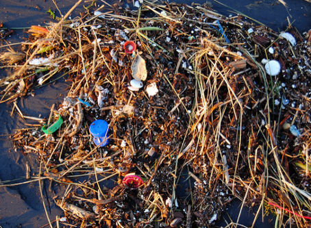 Science to retract study on fish and microplastics