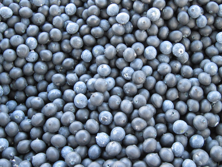 What to Know About the Connection Between Blueberries and Memory