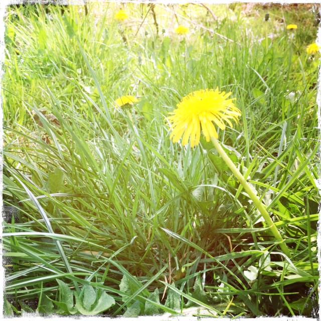 spring blog.JPG