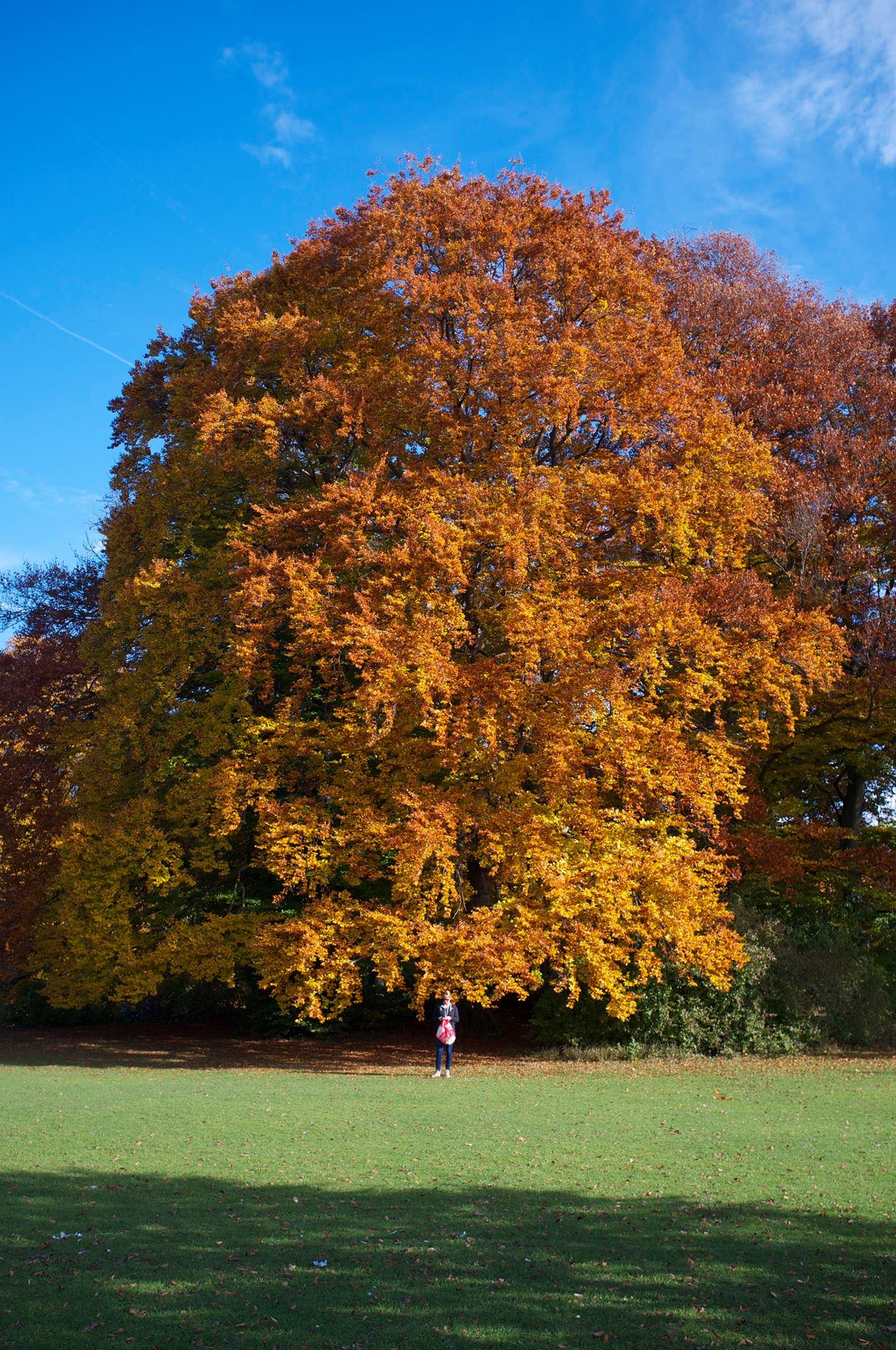 residency_tree1