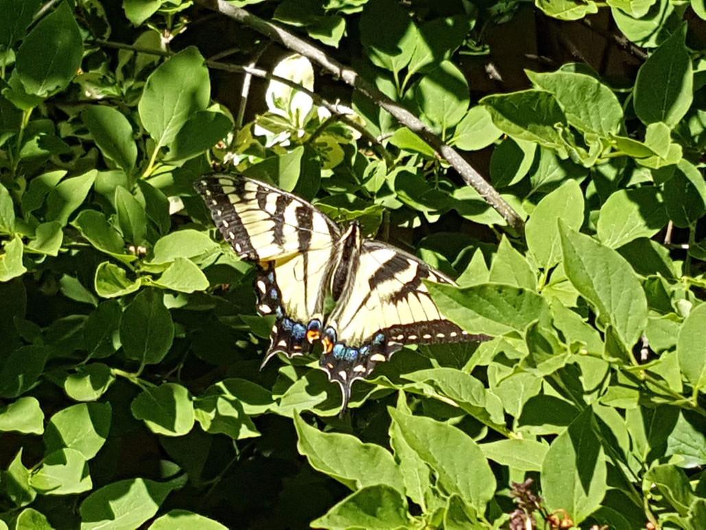 pollinator-canada-2.jpg