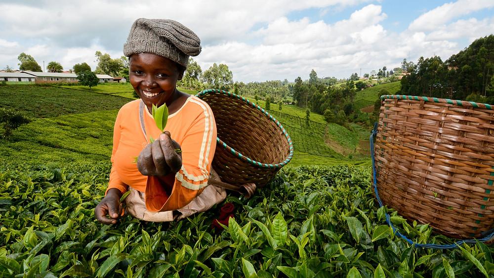 Farmers SDG UN
