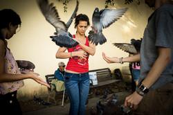 Wings / Old San Juan
