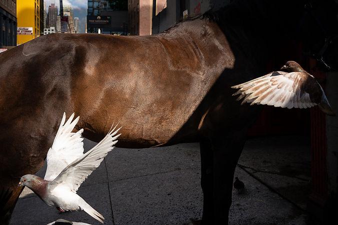 Paul Kessel Street Photography Wings II