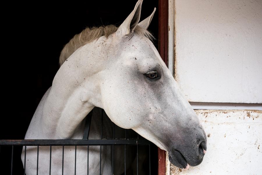 Horse / North Salem