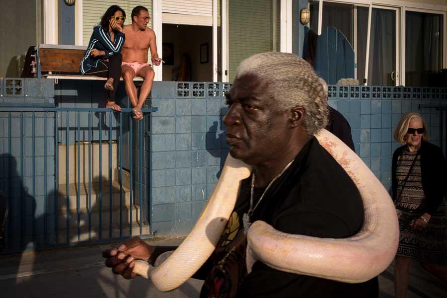 Snake / Venice Beach