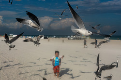 Seagulls & Boy / Miami Beach