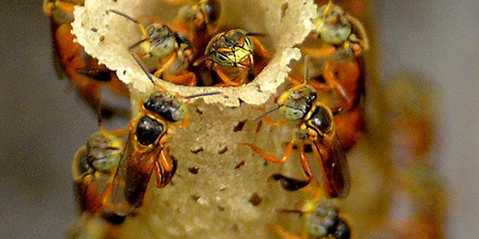 II Oficina de Meliponicultura - Transferência de abelhas para caixa racional