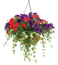 hanging basket.jpg