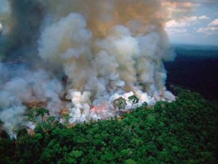 Los problemas de fondo que se deben resolver para evitar una nueva devastación en la Amazonía