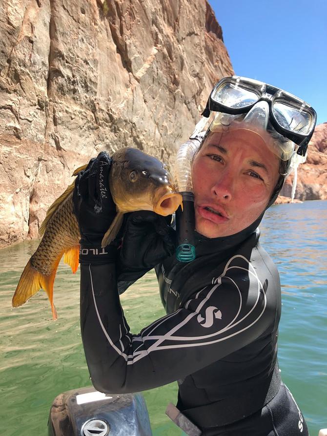 Taramasalata, Spearfishing and Invasive Species