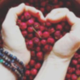 hawthorn berry herbal medicine heart trophorestorative