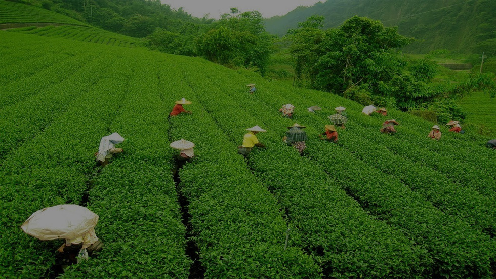 Blog-1-Darjeeling-Tea-Estate-min_edited.