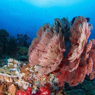 Reefs and corals Nusa Penida