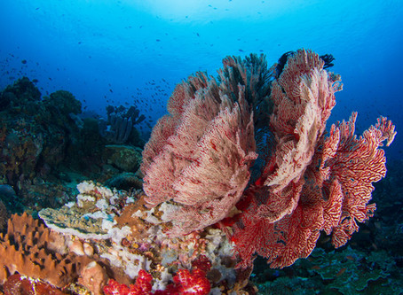 Nusa Penida's hidden gems: those secret dive sites nobody ever mentions!