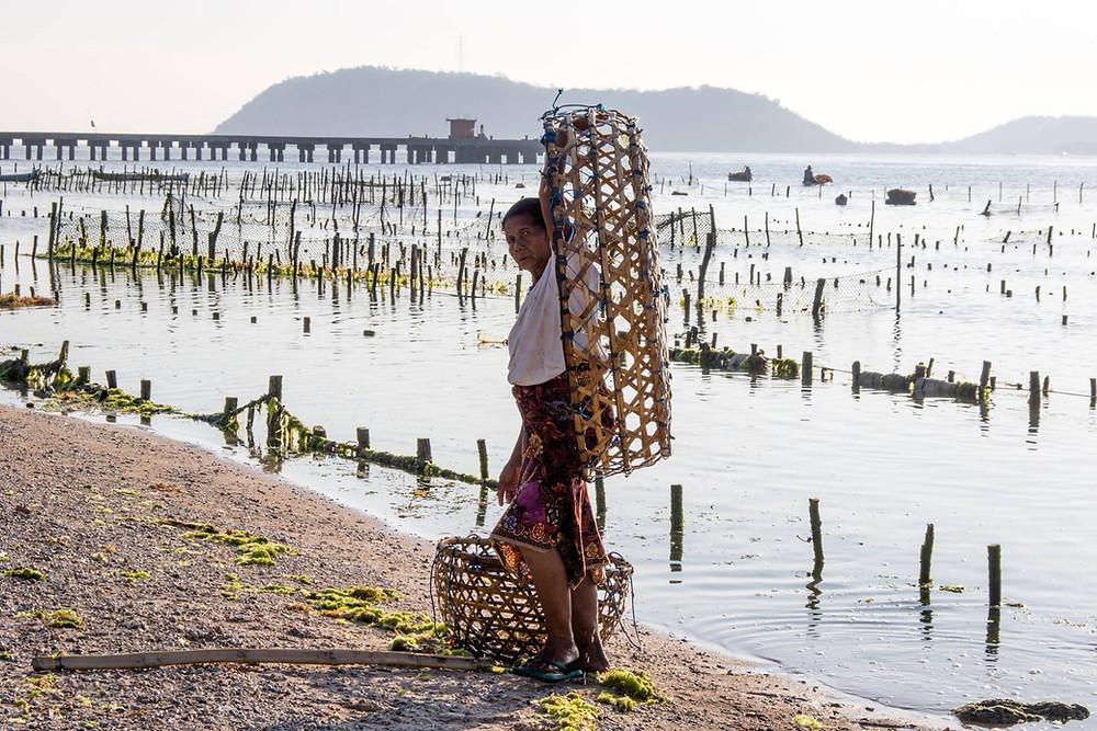 woman picking up seaweed in Nusa Penida Bali