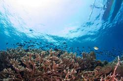Coral reefs Nusa Penida Bali