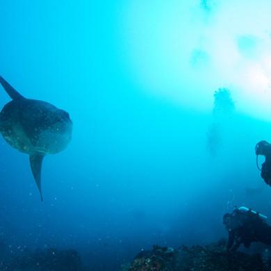Mola mola Crystal Bay Nusa Penida