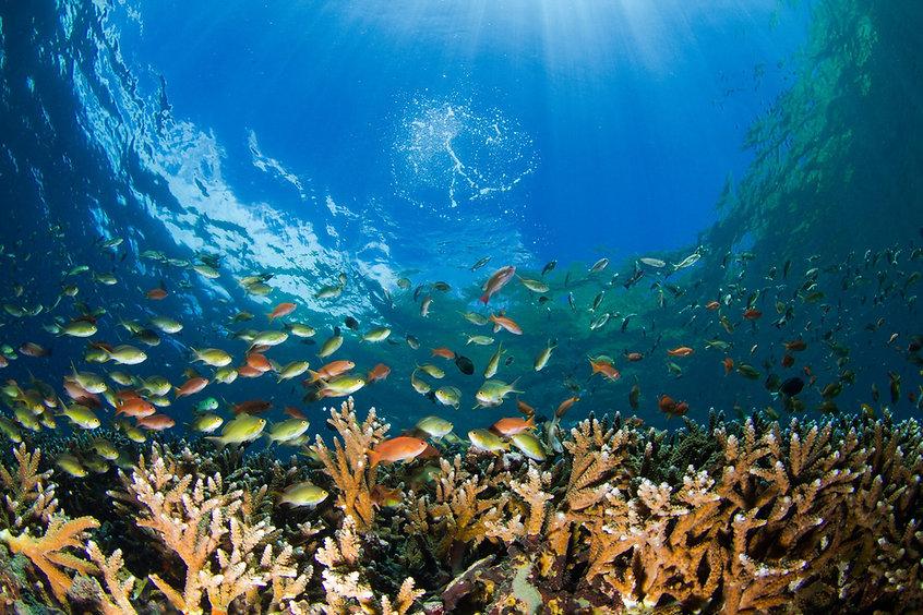 PADI Rescue Diver Nusa Penida