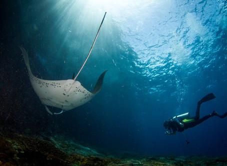 Pourquoi choisir Nusa Penida pour vos vacances de plongée sous-marine?