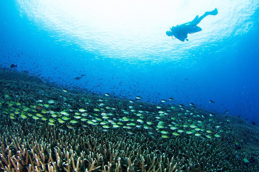 PADI Discover Scuba Diving Nusa Penida