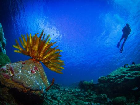 Bali's top dive spots