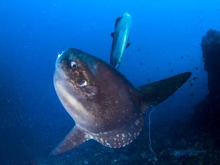 Marine life in Nusa Penida