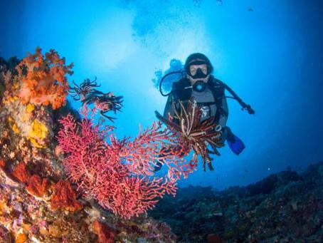 Quels sont les meilleurs endroits pour plonger à Bali ?