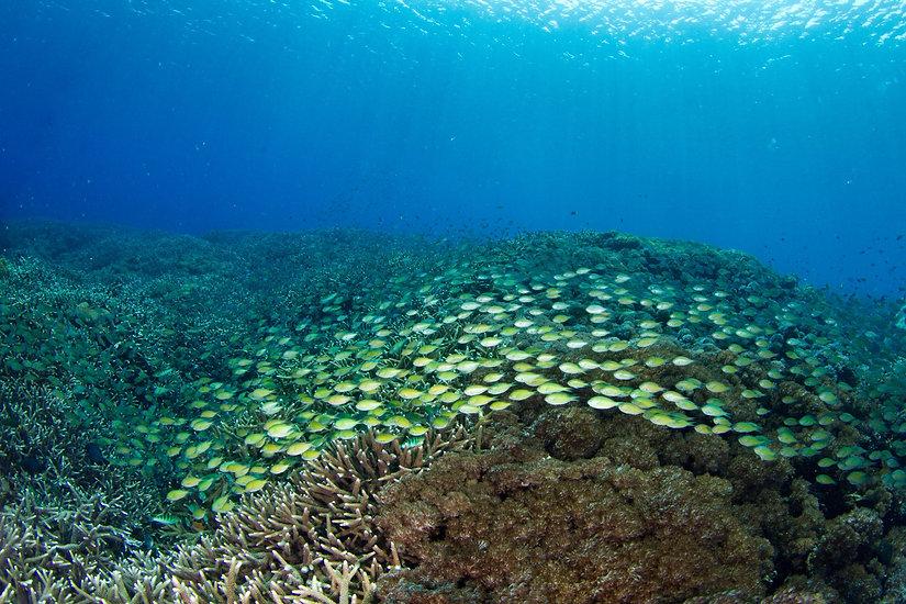 PADI Open Water Course Nusa Penida