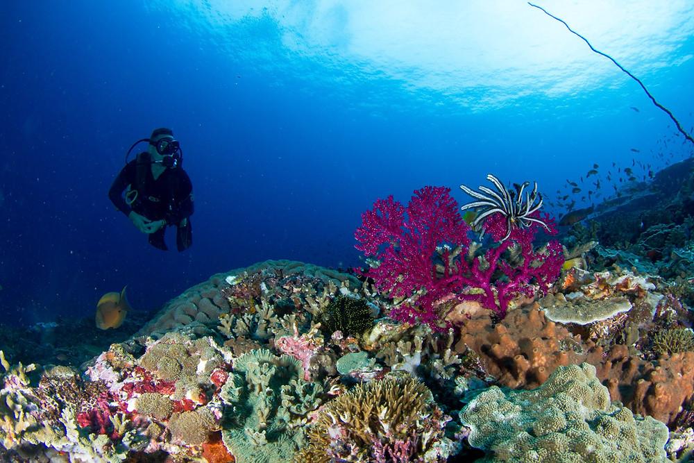 Diver in Nusa Penida - Purple Dive