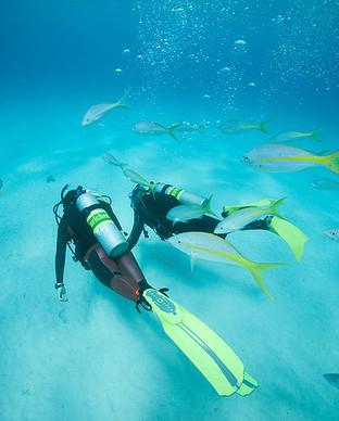 Bahamas09_0351_spec.jpg