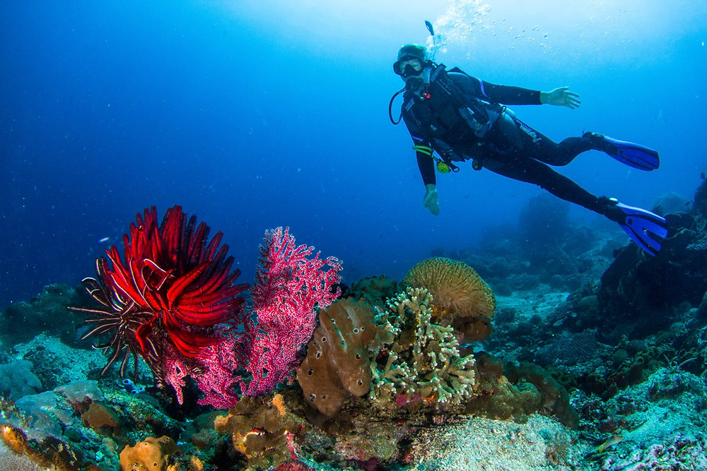 Diving over the reefs in Nusa Penida
