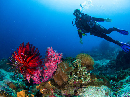 How to improve your air consumption in scuba diving?