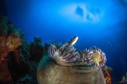 Reefs Bali