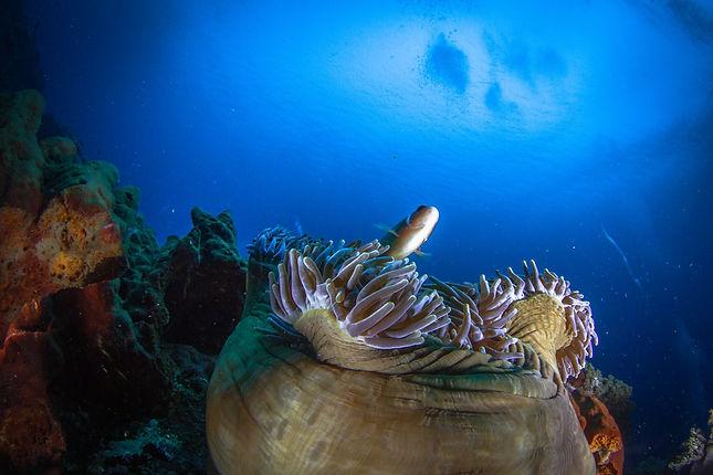 Diving Nusa Penida