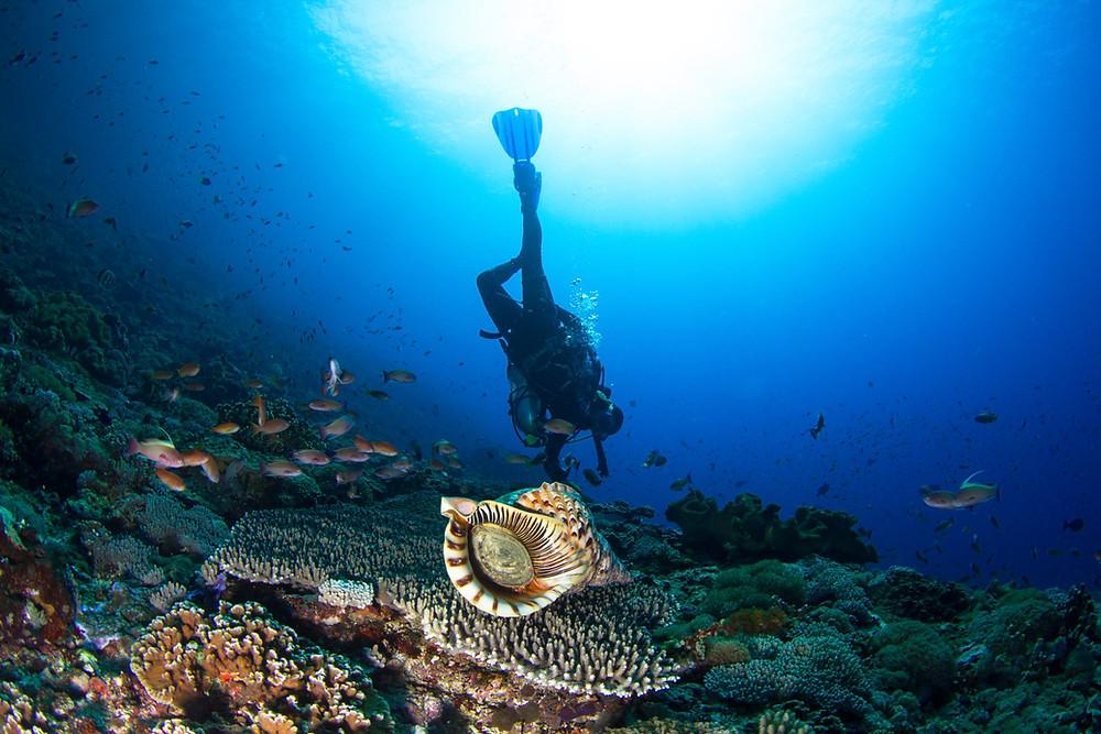 Diver hovering in Nusa Penida Bali