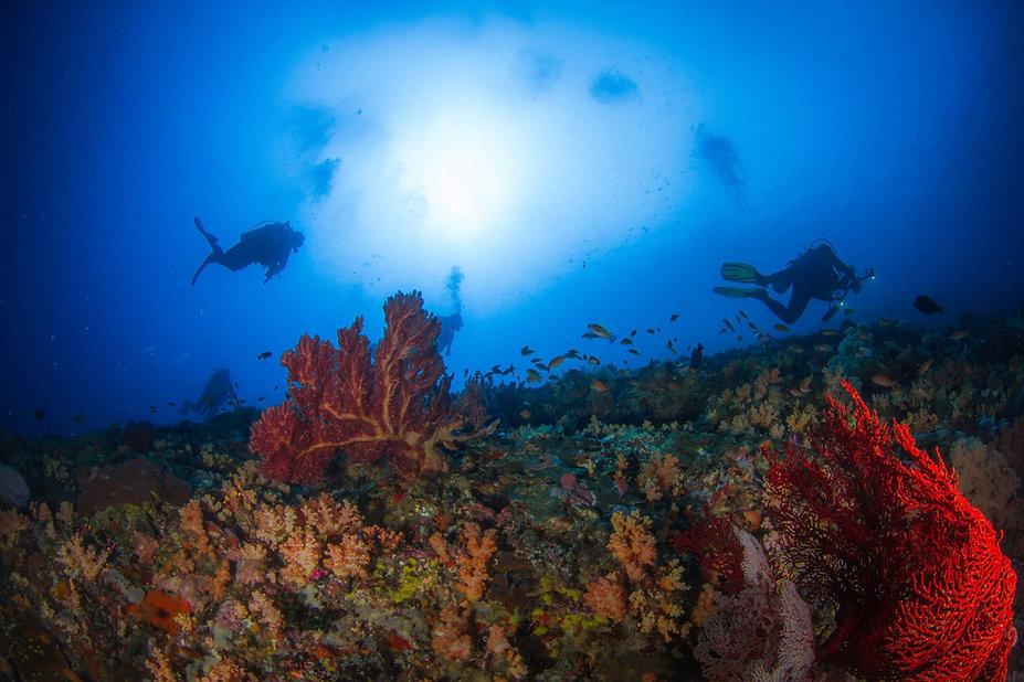 Diving in Nusa Penida - Purple Dive