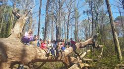 Nature hikes