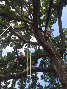 Ropes Tree Climbing