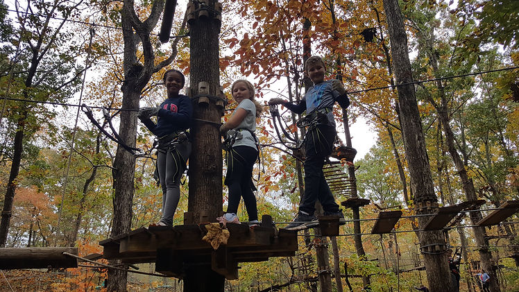 Treetop obtacle course