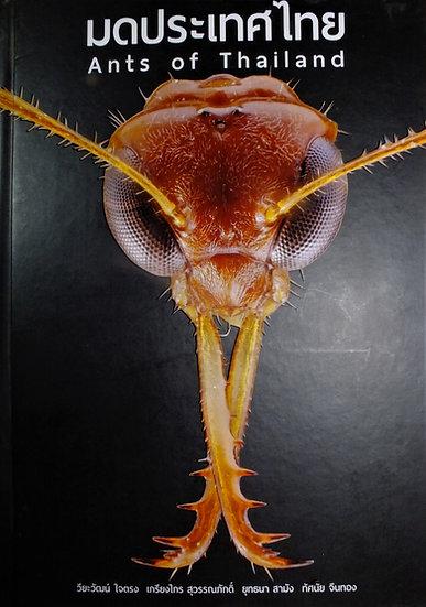 Ants of Thailand